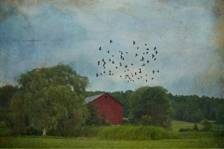 barn with birds